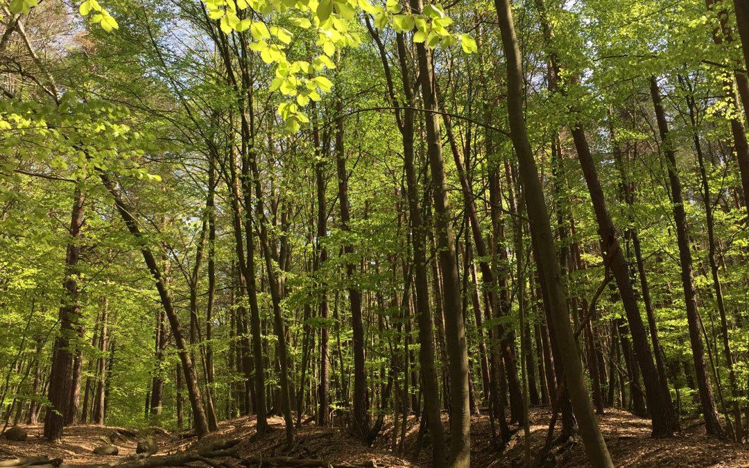 Wandern im Urwald der Uckermark – Wanderlust #1